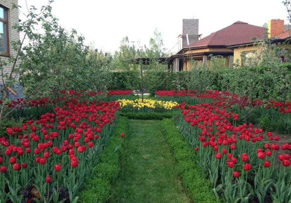 Клумбы из красных и жёлтых тюльпанов