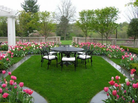 Клумба из тюльпанов на садовом участке