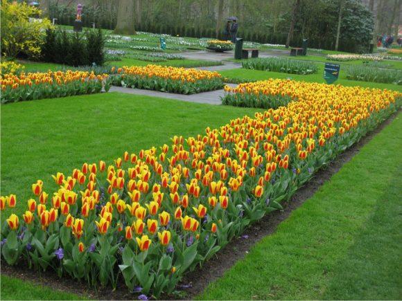 Рабатка из жёлто-красных тюльпанов