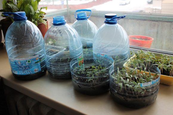 Горшки для рассады из пятилитровых пластиковых бутылок
