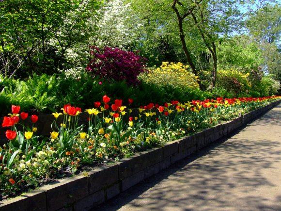Бордюр из тюльпанов у садовой дорожки