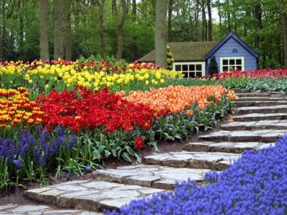 Клумба из тюльпанов и других цветов у лестницы на даче