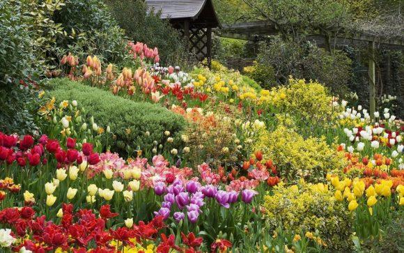 Тюльпаны в саду природного стиля