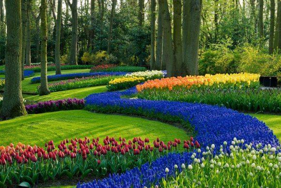Эффектная рабатка из тюльпанов и гиацинтов