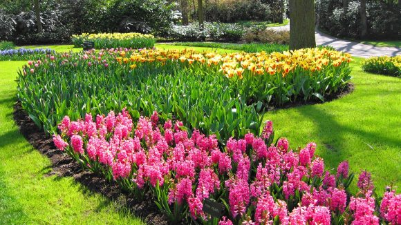 Тюльпаны в природном саду