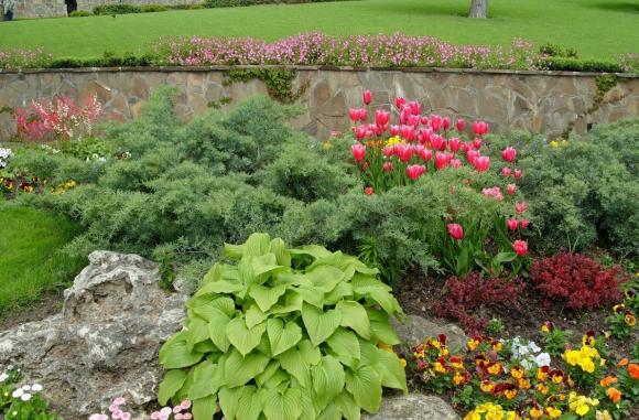 Тюльпаны, можжевельник и хоста на рокарии