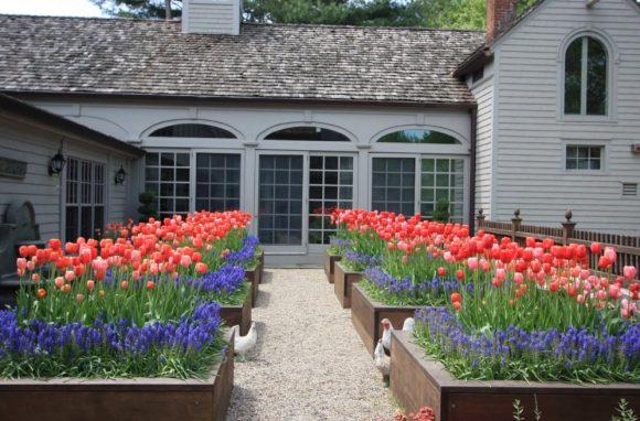 Роскошные клумбы из тюльпанов и мускари