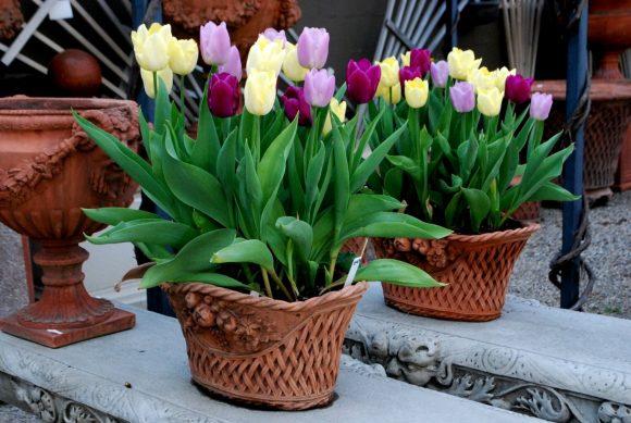 Тюльпаны в корзинах