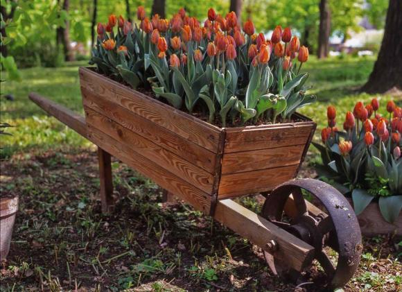 Самодельная клумба с тюльпанами