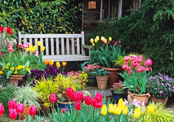 Вазоны с тюльпанами у лавочки