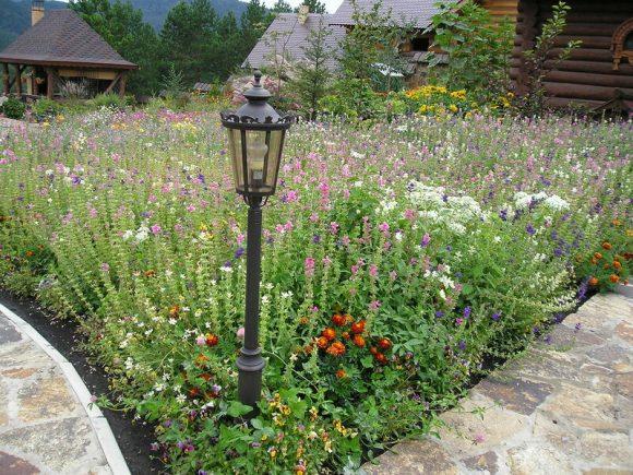 Цветущий газон на участке деревенского стиля