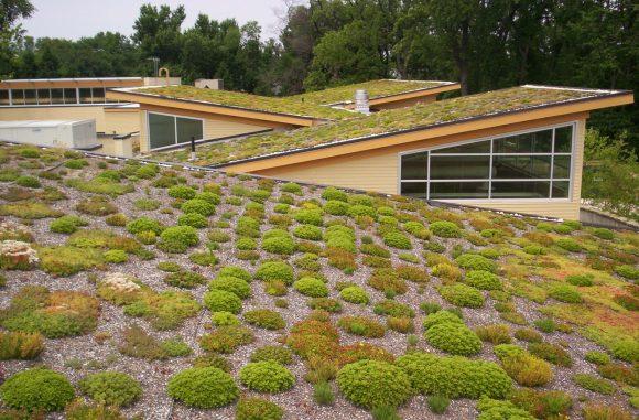 Зелёные крыши на даче