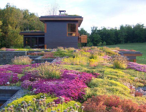 Крыша с разноцветными низкорослыми и покровными культурвми