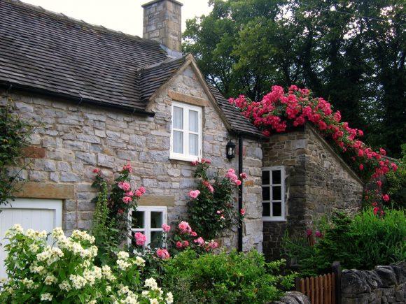 Плетистые розы на крыше дачного домика
