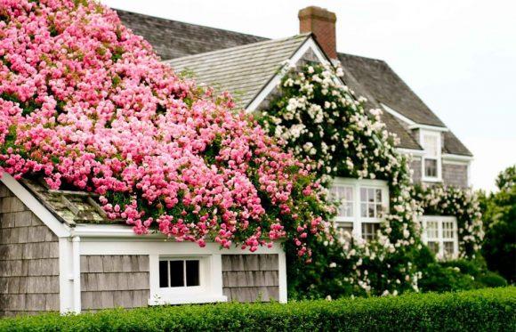 Цветущие лианы на крыше дачного дома
