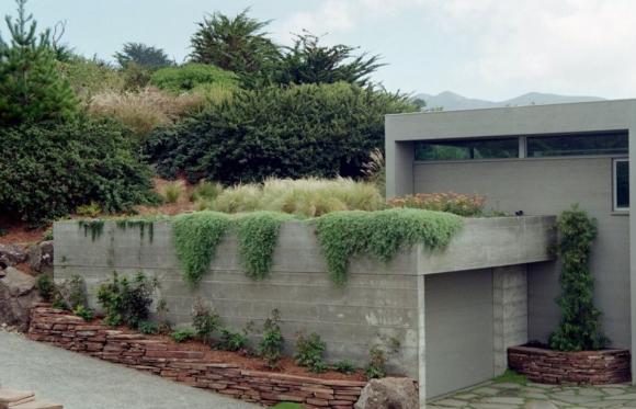 Кустарники на крыше дачного гаража