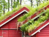 Декоративная трава на крыше дома