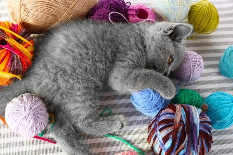 Картинки кошка играет с клубком