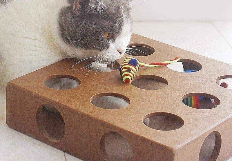 Быстро и без затрат: игрушка для кошки из старой обувной коробки